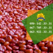Corn seeds Podolsk 274 SV from PBF Kolos