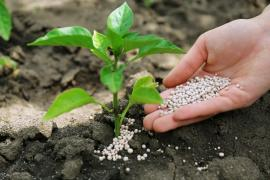 Mineral fertilizer. Nitrogen-phosphorus fertilizers