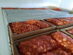 Продам овочі оптом Київ