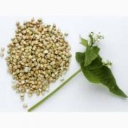 "Sell seeds of buckwheat variety ""Nine""; ""Dikul"", the 1st reproduction"